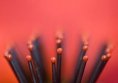 Red-Brush